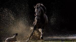 horse-vs-dog[1]